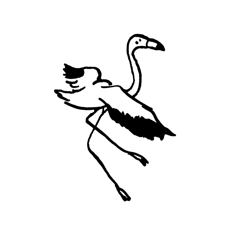 mandai_spot_0022_mspots_0009_American-Flamingo.jpg