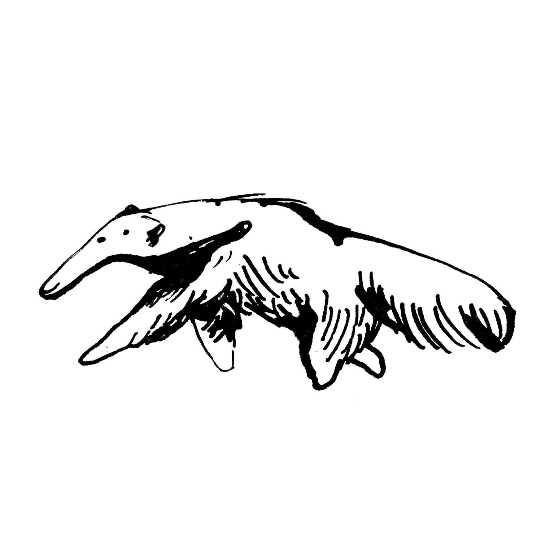 mandai_spot_0025_mspots_0006_Giant-anteater.jpg
