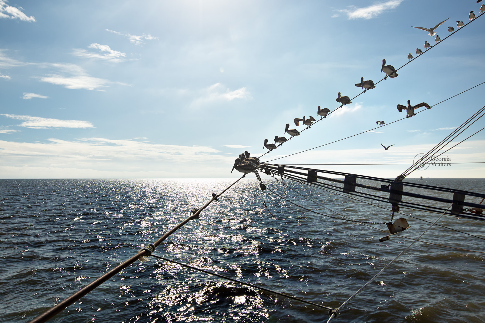 Birds rest on the guide wires of a shrimp boat while waiting for the harvest to be brought in.