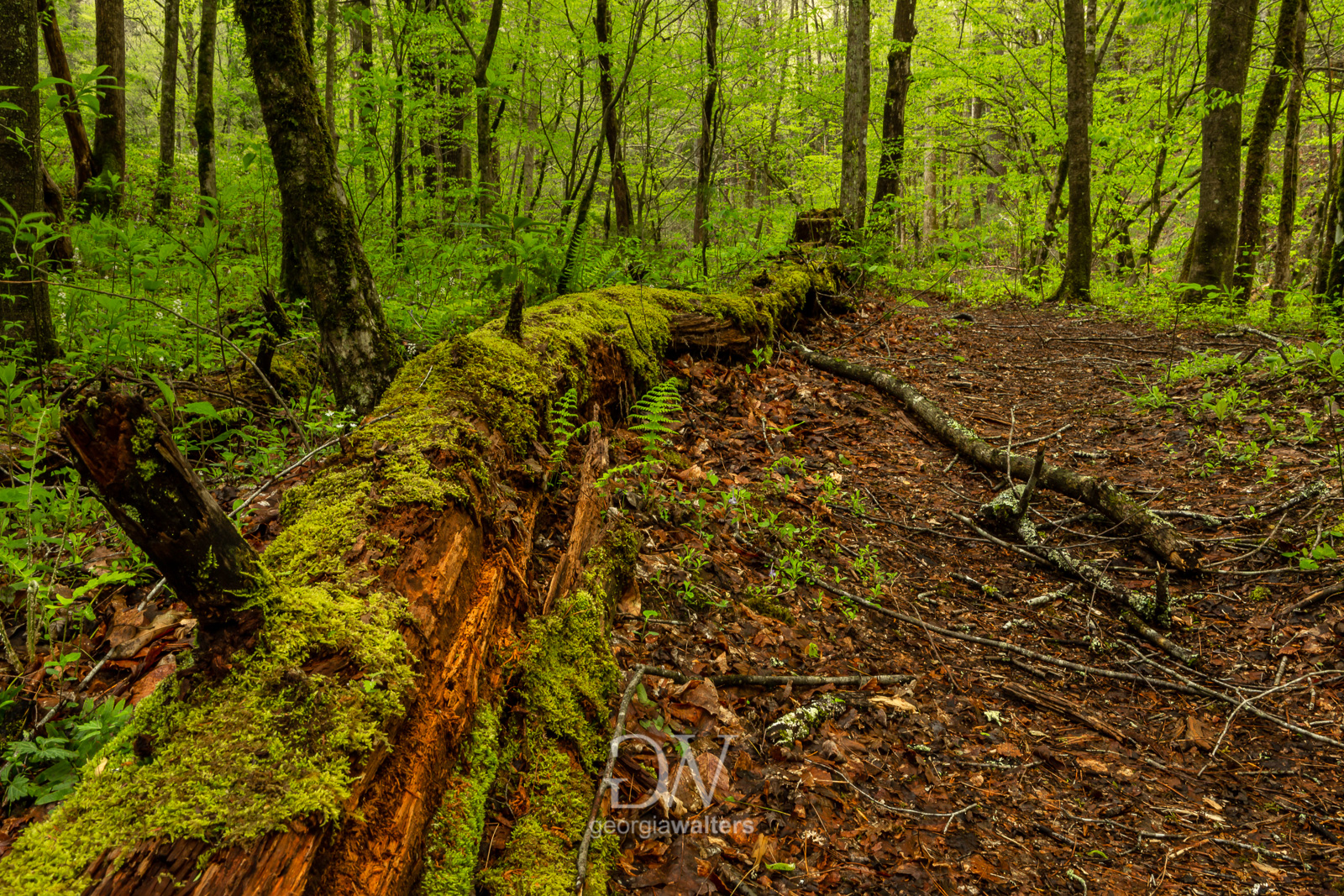Moss covered log laying on ground by trail.