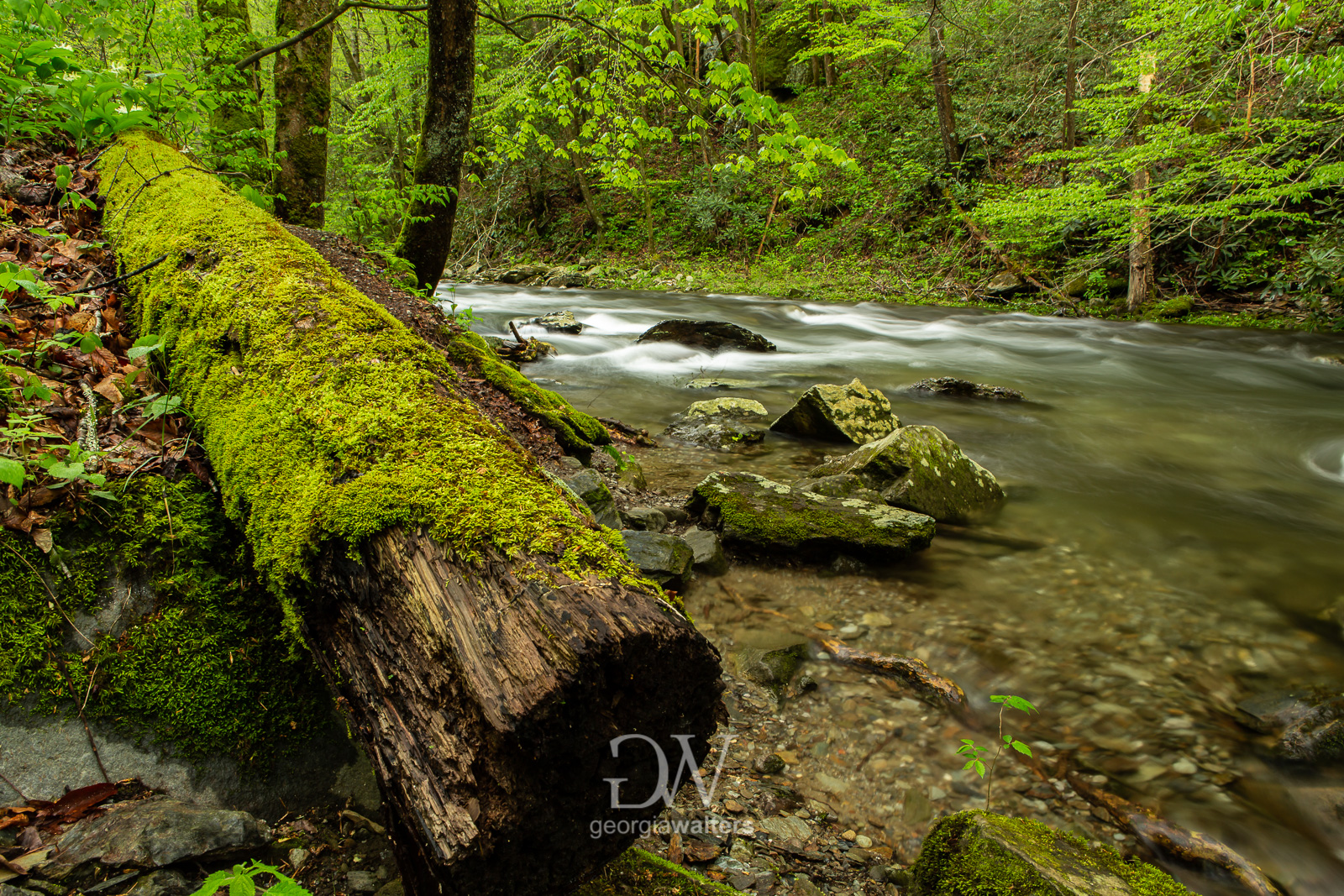 Moss covered log laying on the ground by a flowing creek.