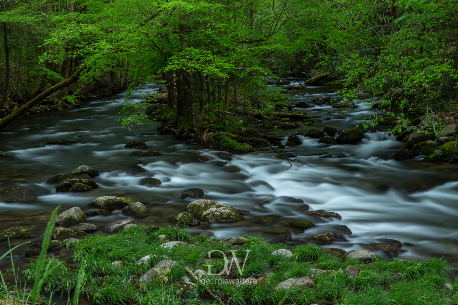Two swift flowing creeks merge into one.