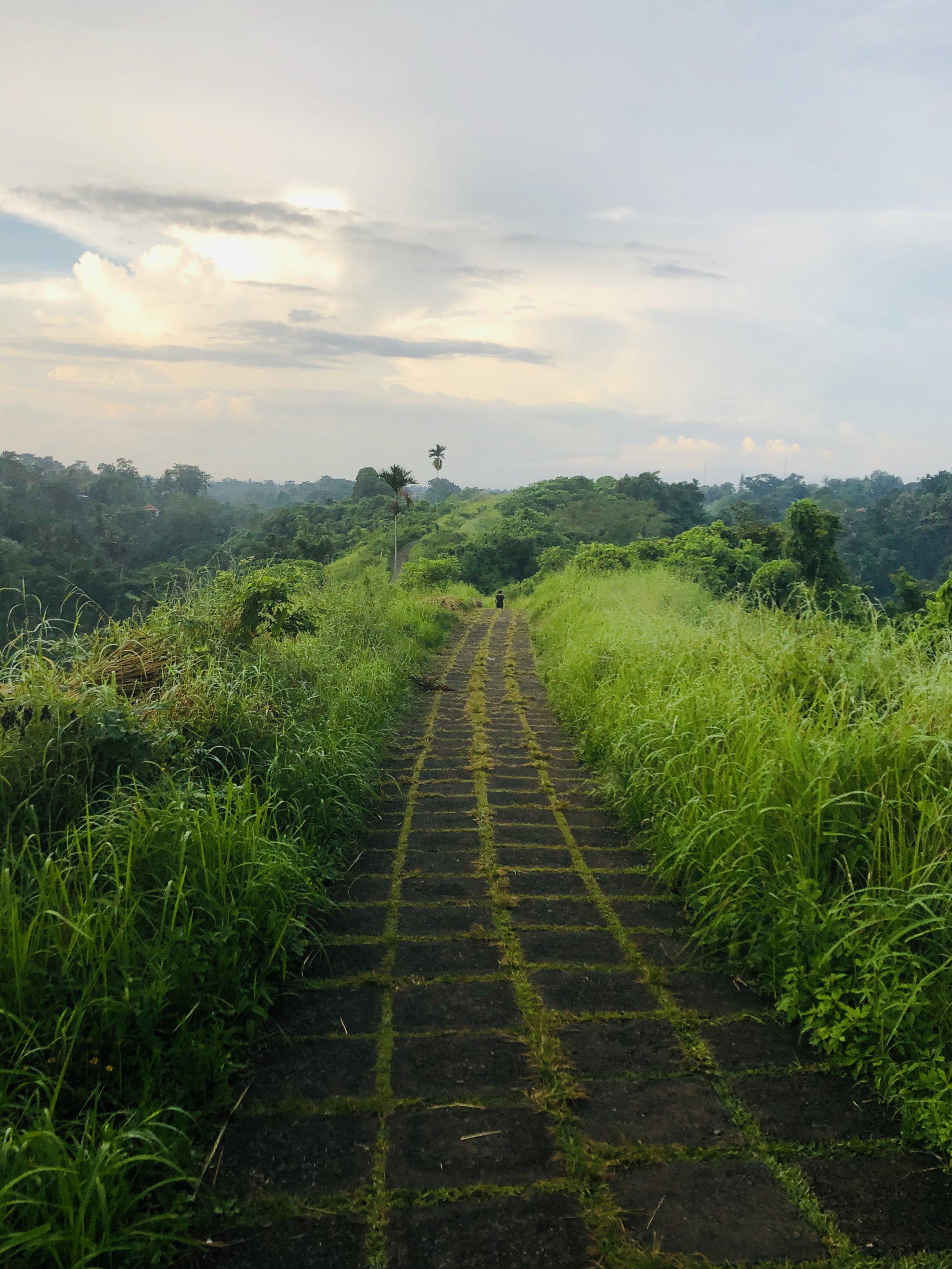 Campuhan Ridge Hike, Ubud