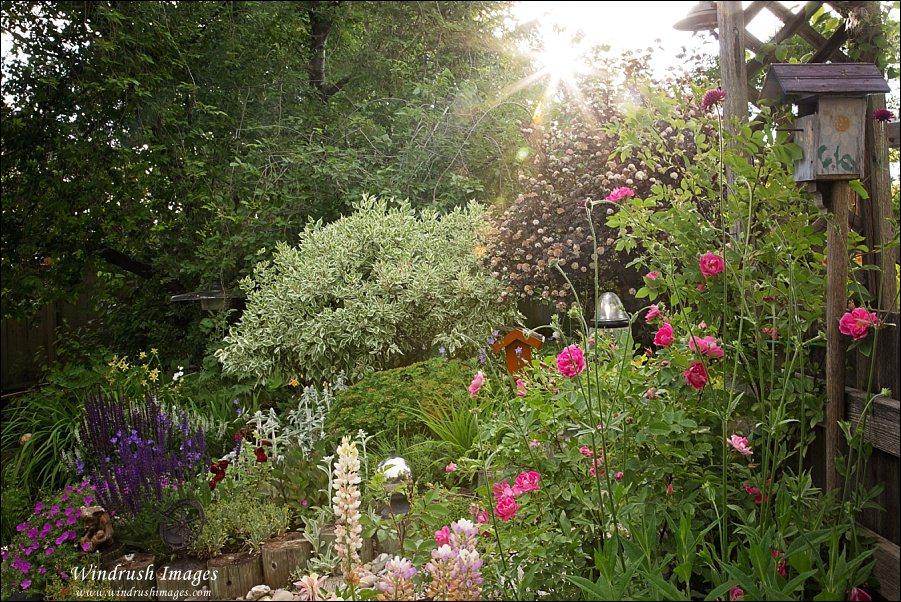 Garden-photography-Calgary.jpg
