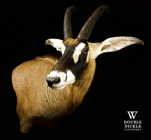kudu20.jpg
