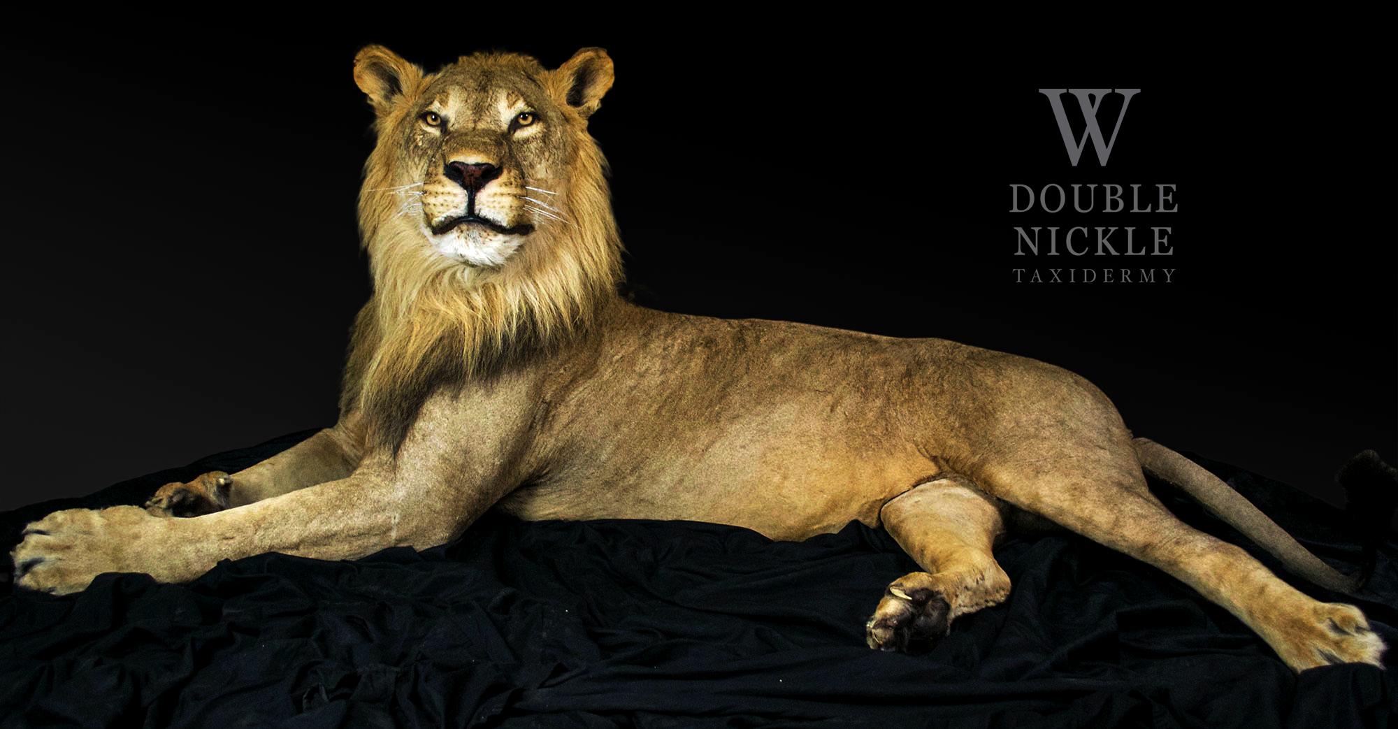 lion27.jpg