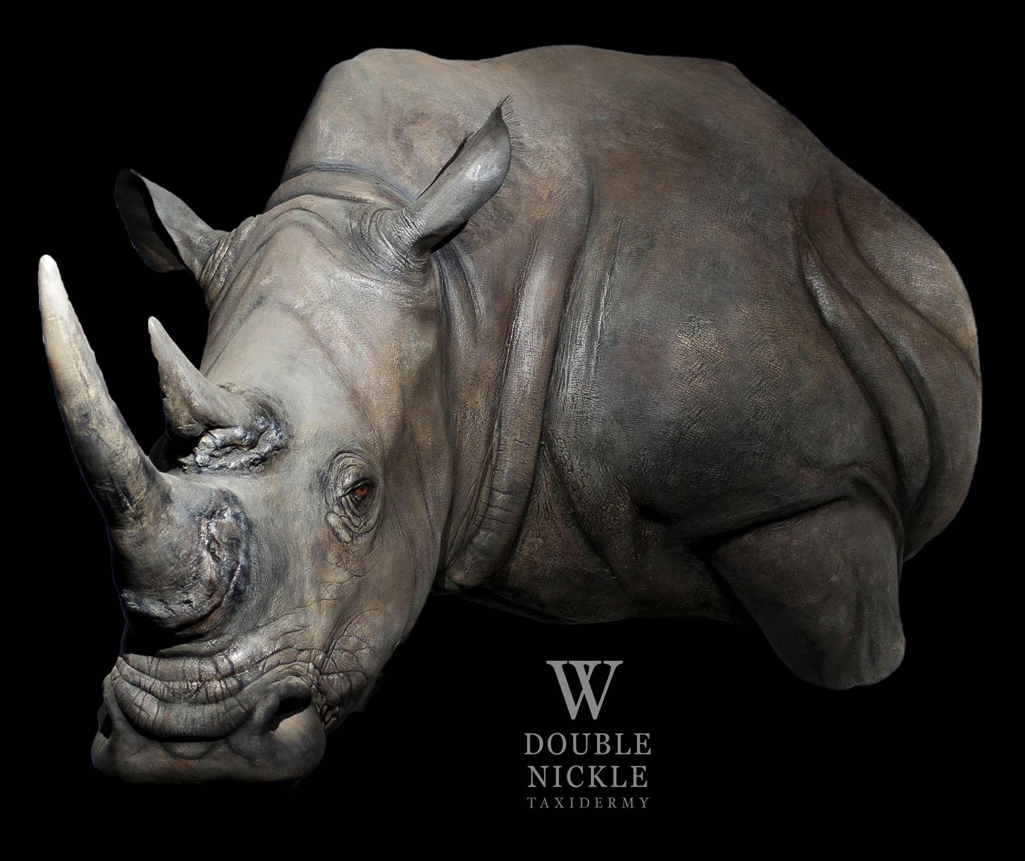 rhino27.jpg