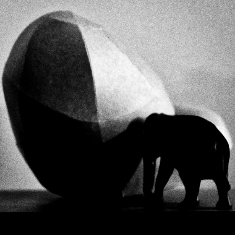 Elephant, with Horst Kiechle stomach.