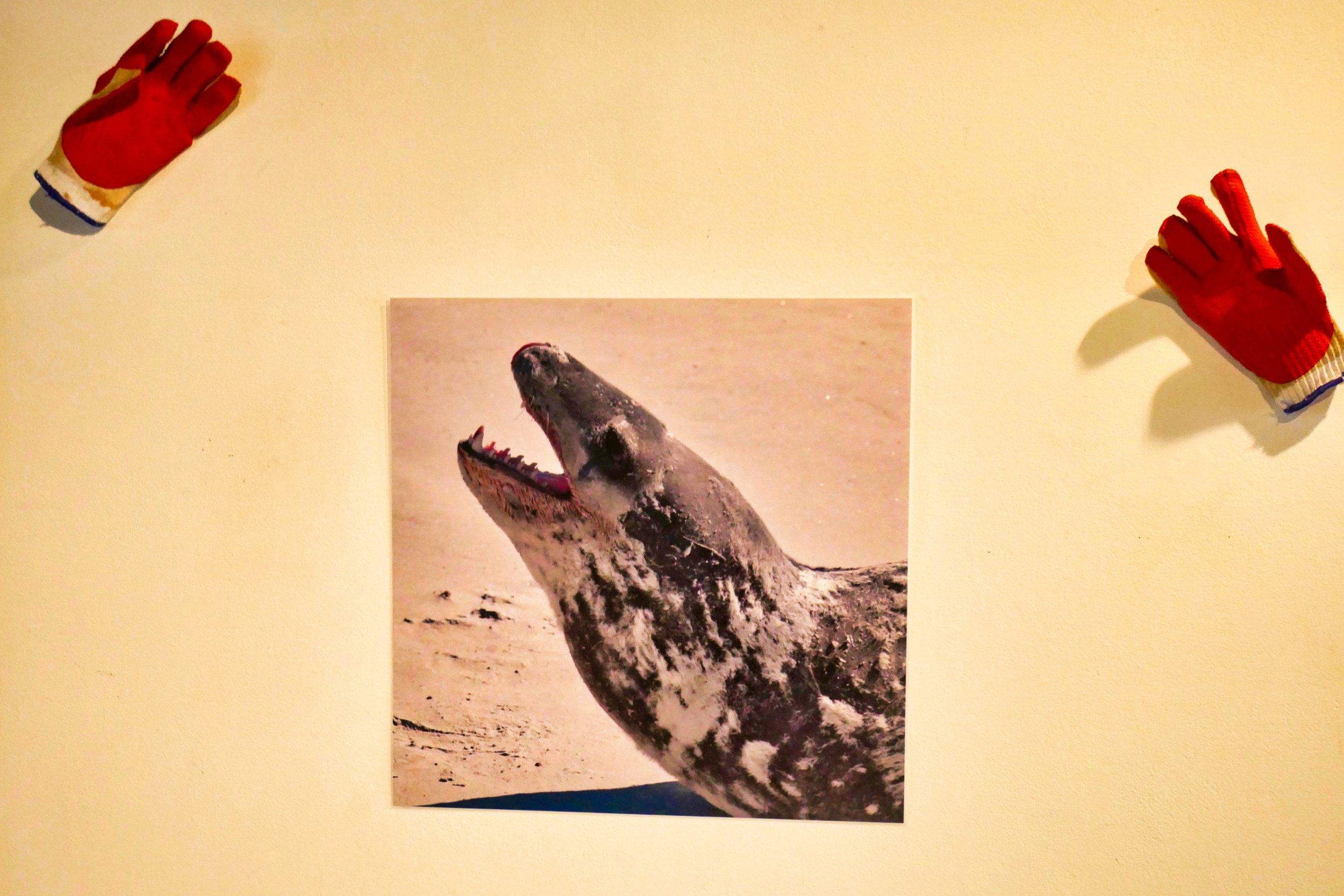Leopard Seal + Gloves.jpeg