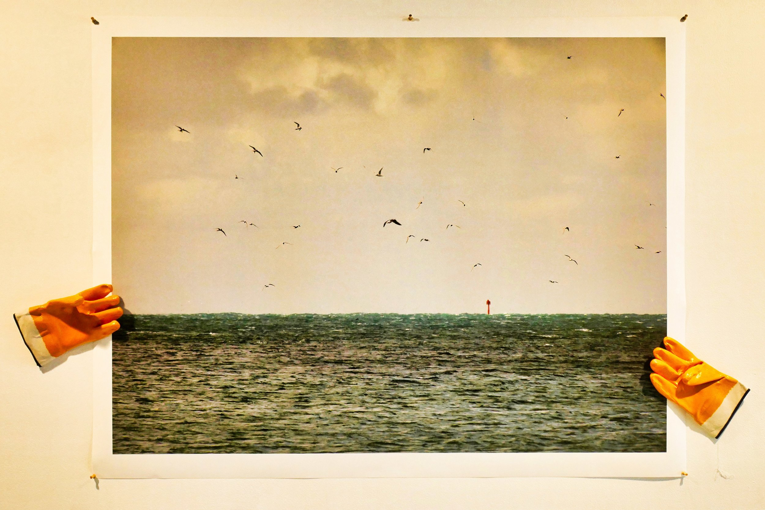 Sea Birds Articulate.jpeg
