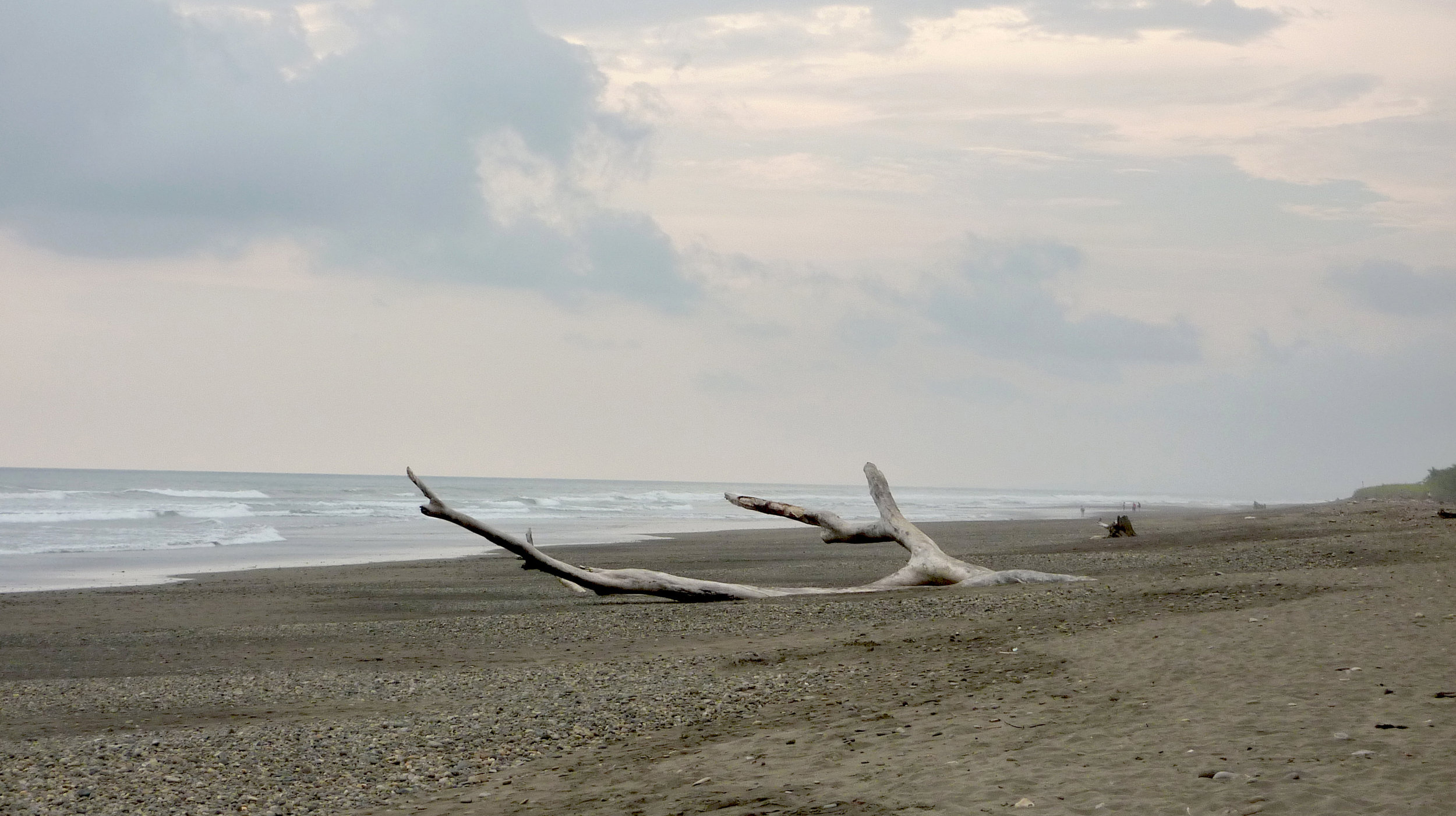 Driftwood, Dominical, Costa Rica