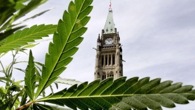 cannabis-marijuana-legalisation-ottawa-federa.jpg