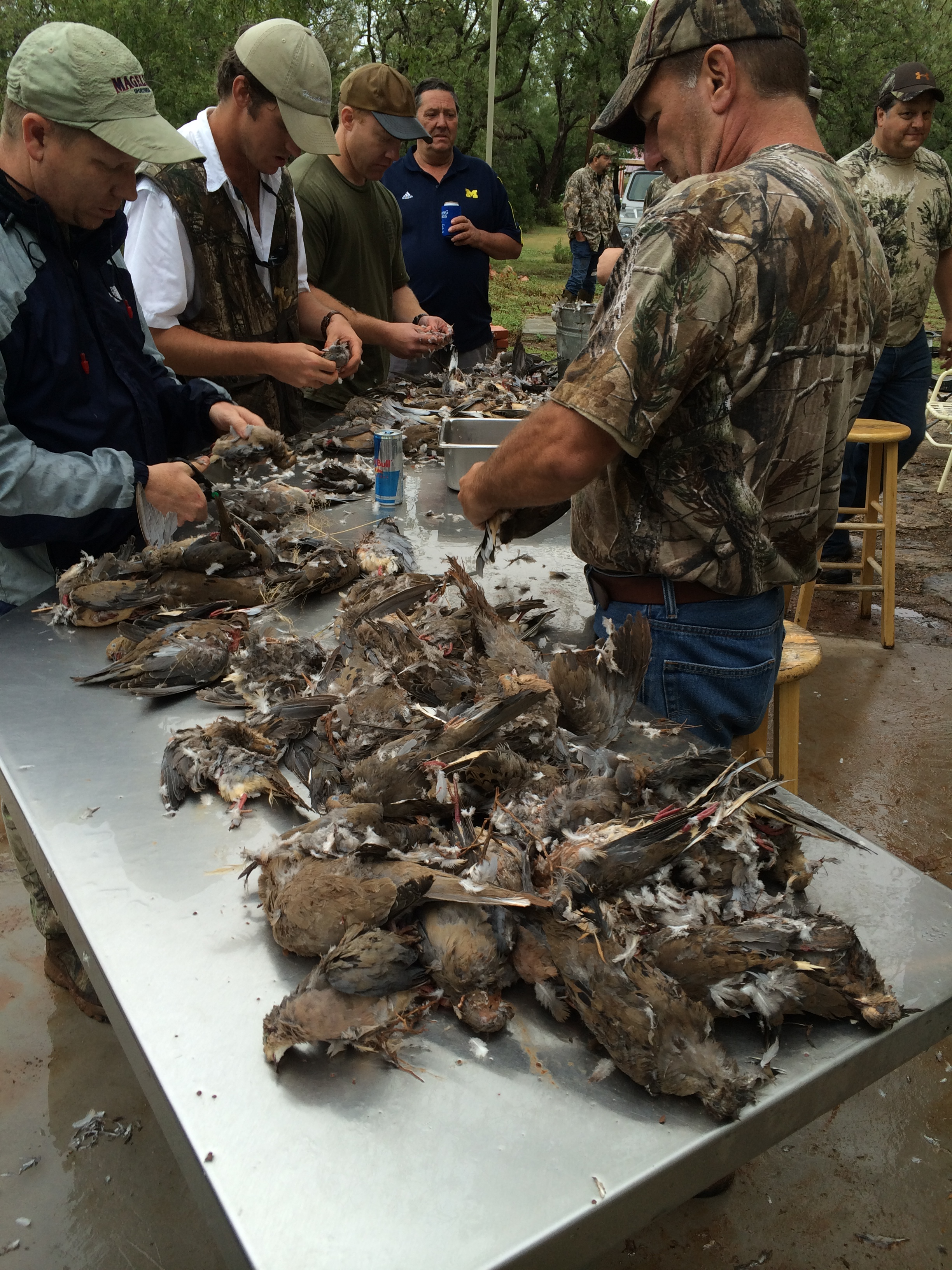 Dove Hunt Bird Cleaning.JPG