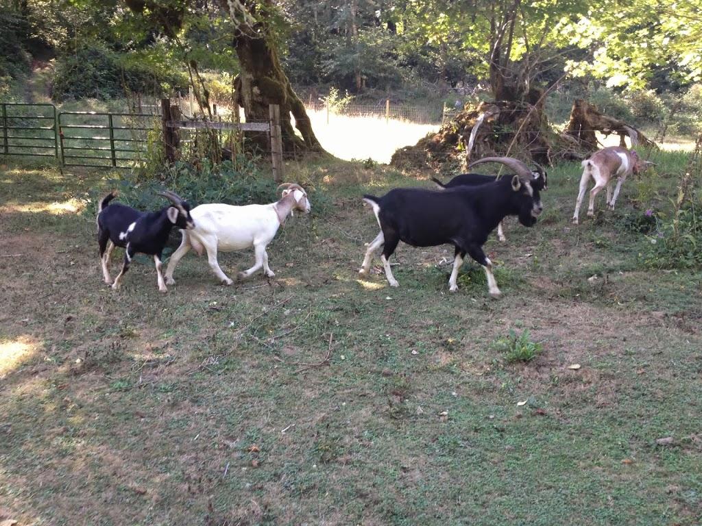 photo-goat.jpg
