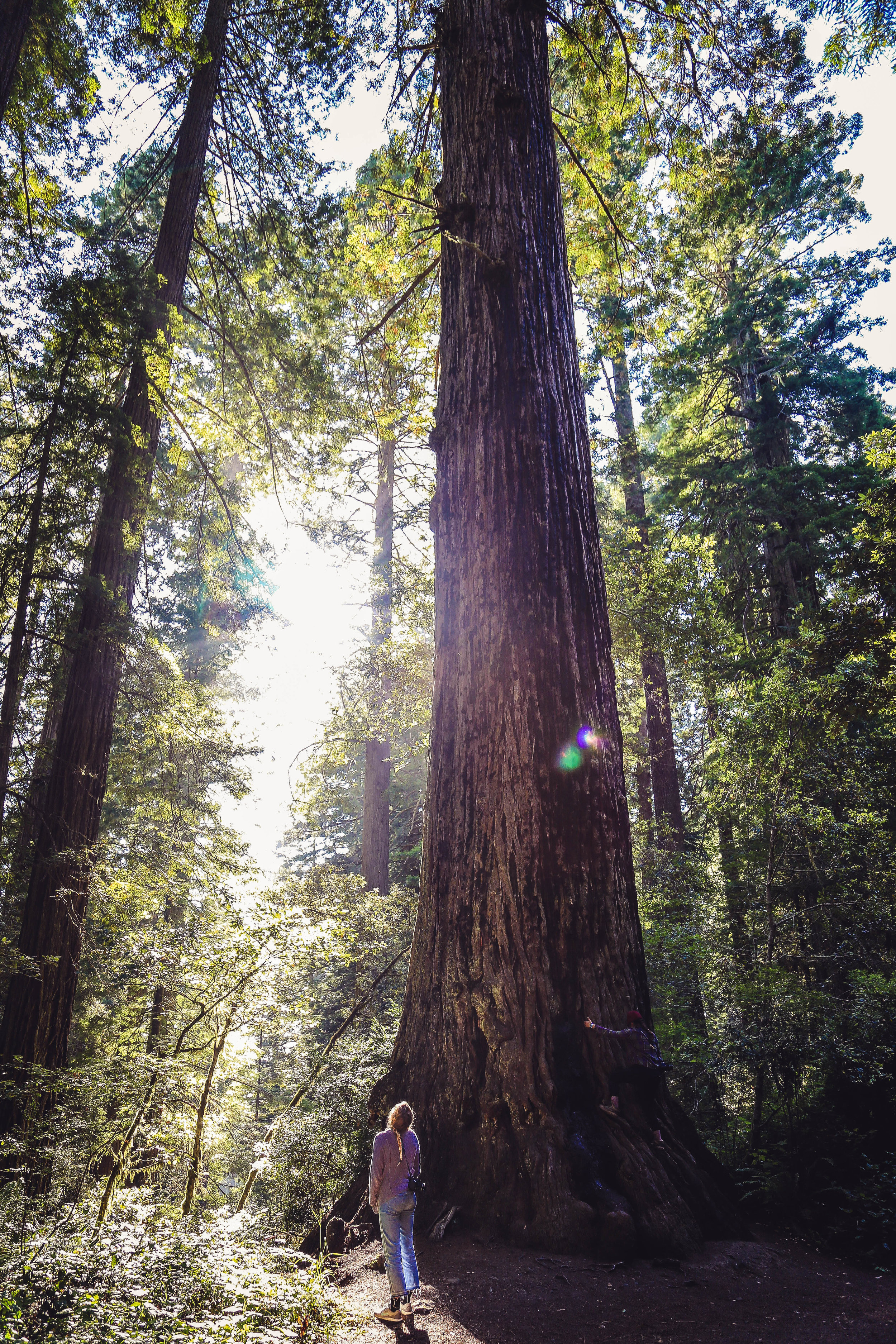 Vintage Redwoods.jpg