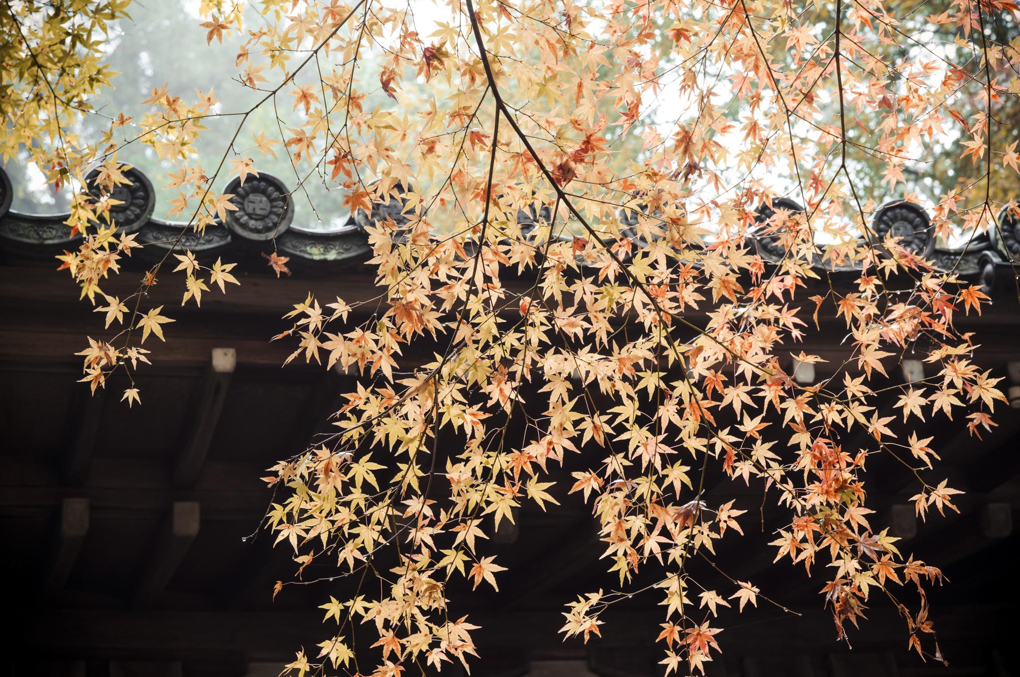 AV Kyoto-5_.jpg