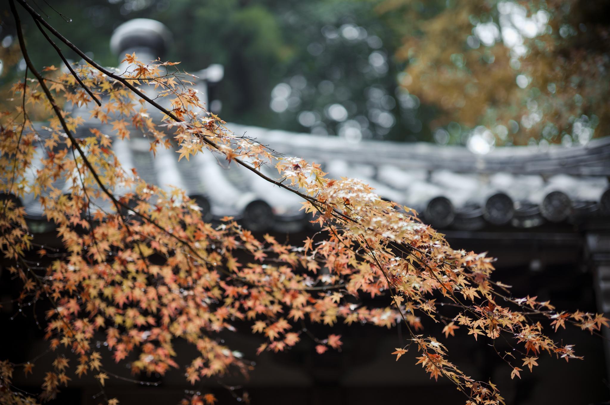 AV Kyoto-6_.jpg