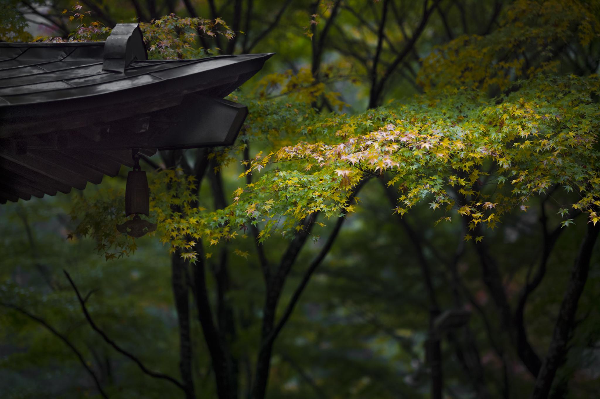 AV Kyoto-11_.jpg