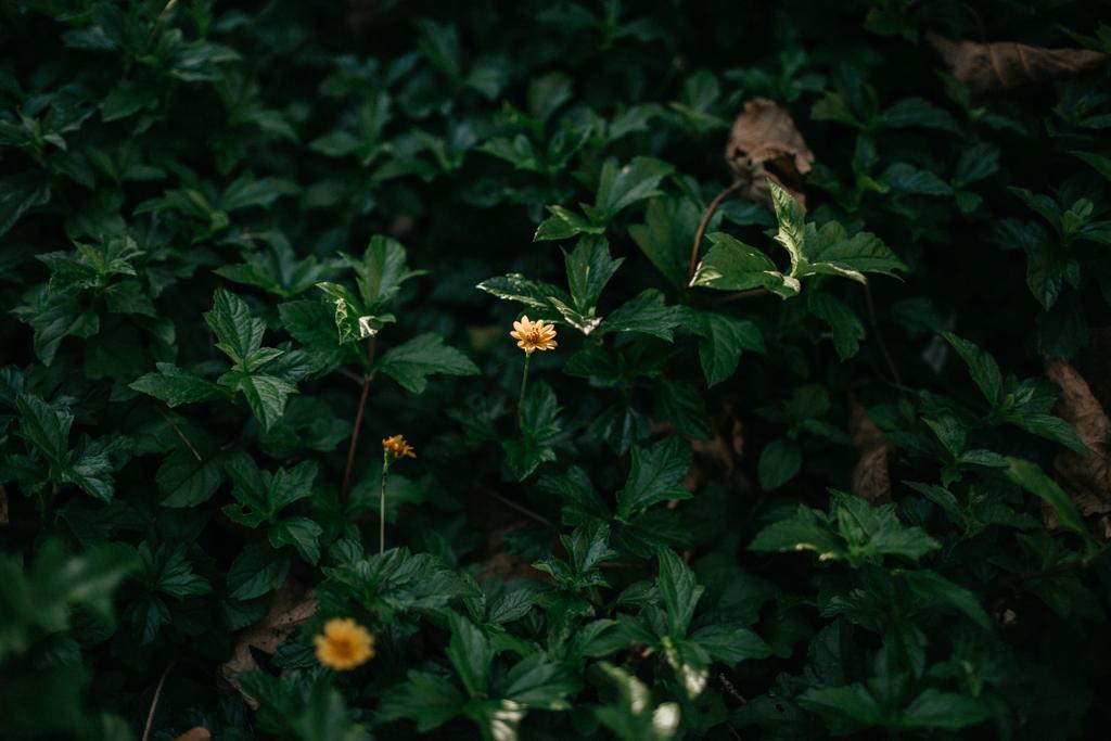 sunshinecoastfamilyphotography-26.JPG