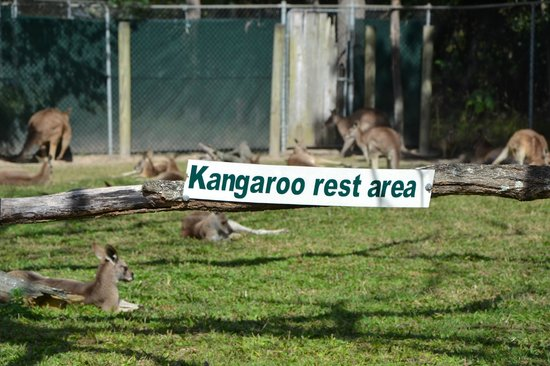Lone Pine Koala Sanctuary in Queensland fences off part of the area where tourists can interact with, pet and feed their kangaroos and wallabys, providing a safe area the animals can rest away from humans. Perhaps your next conference should provide a scientist rest area, where individuals can sit and work quietly without being disturbed.