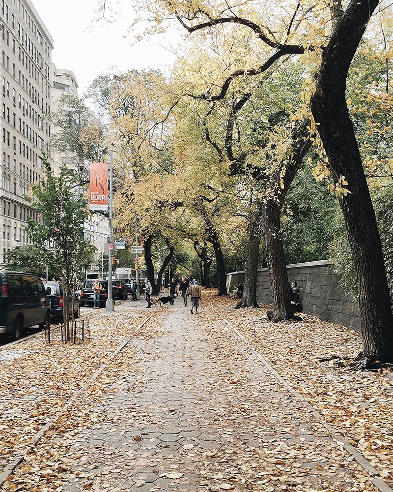 Con đường bên cạnh Central Park, công viên trung tâm New York, gió thổi cả con người đầy xác lá vàng rơi.