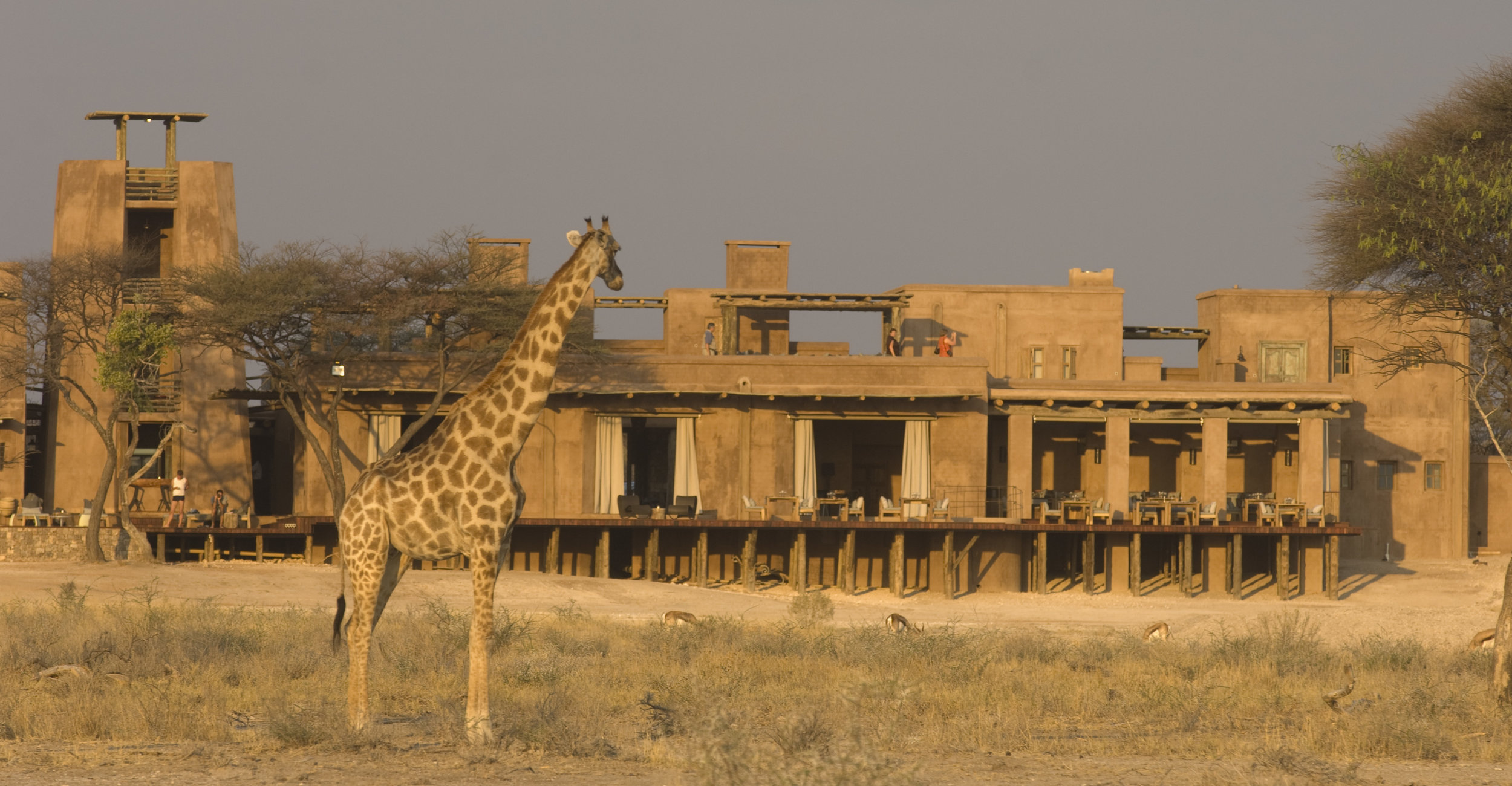 Fort form pan Giraffe 01.jpg