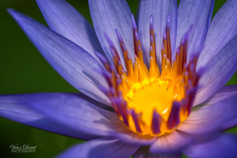 Lotus 6 26.7.2016.jpg