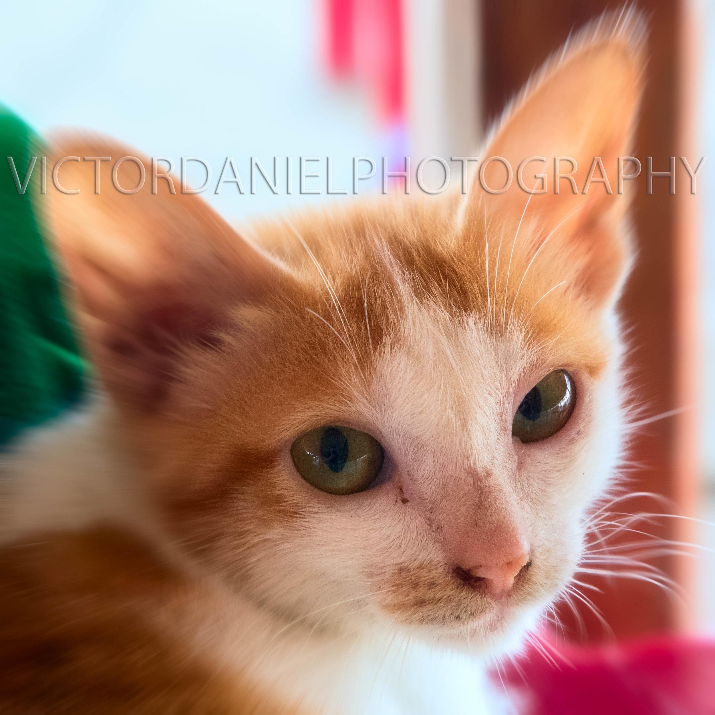 Cat#6.jpg