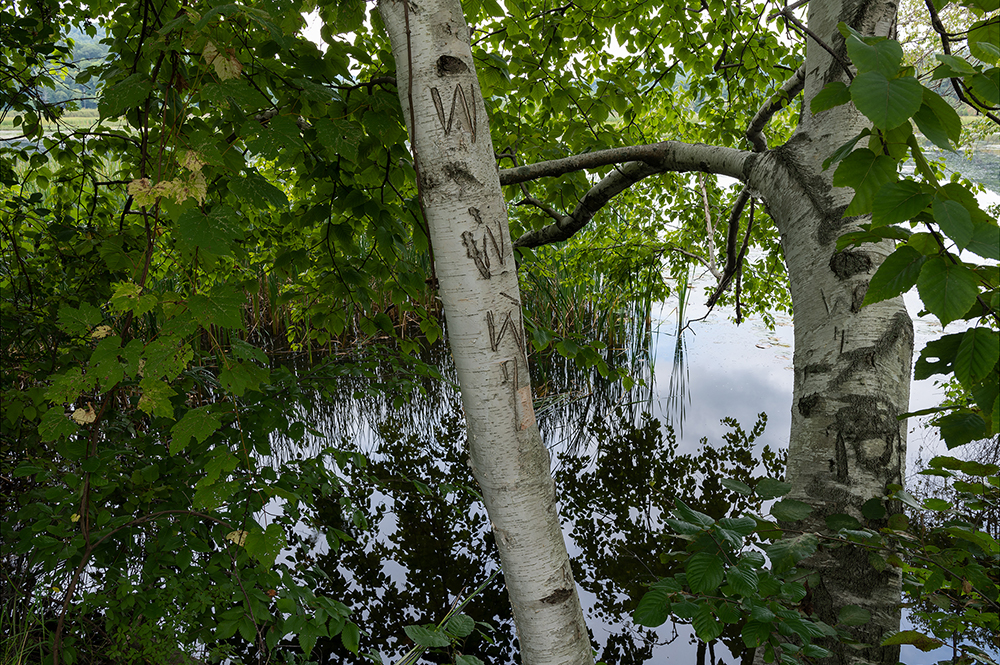 Graffiti on Birch, Herricks Cove Nature Preserve, Vt.