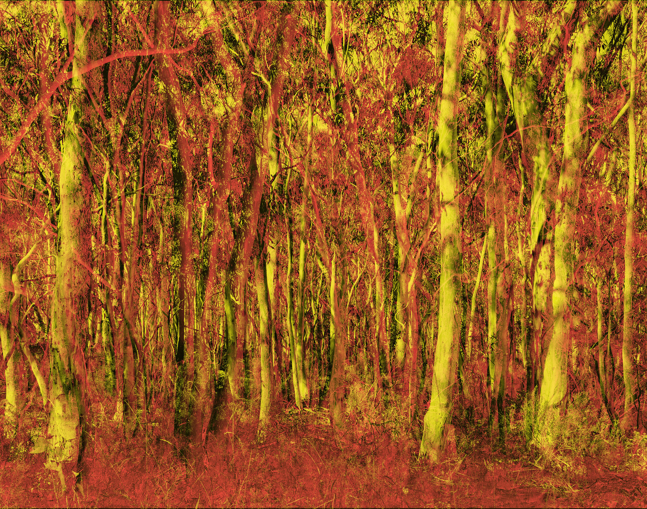 option 2 redyellow forest.jpg