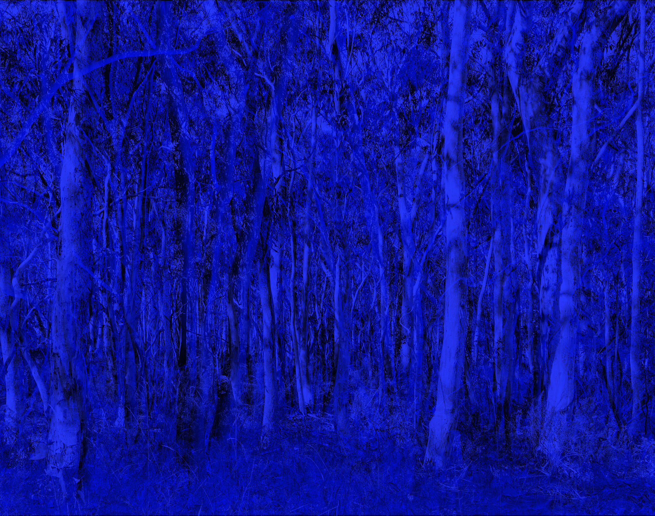 option 2 blueblue forest.jpg