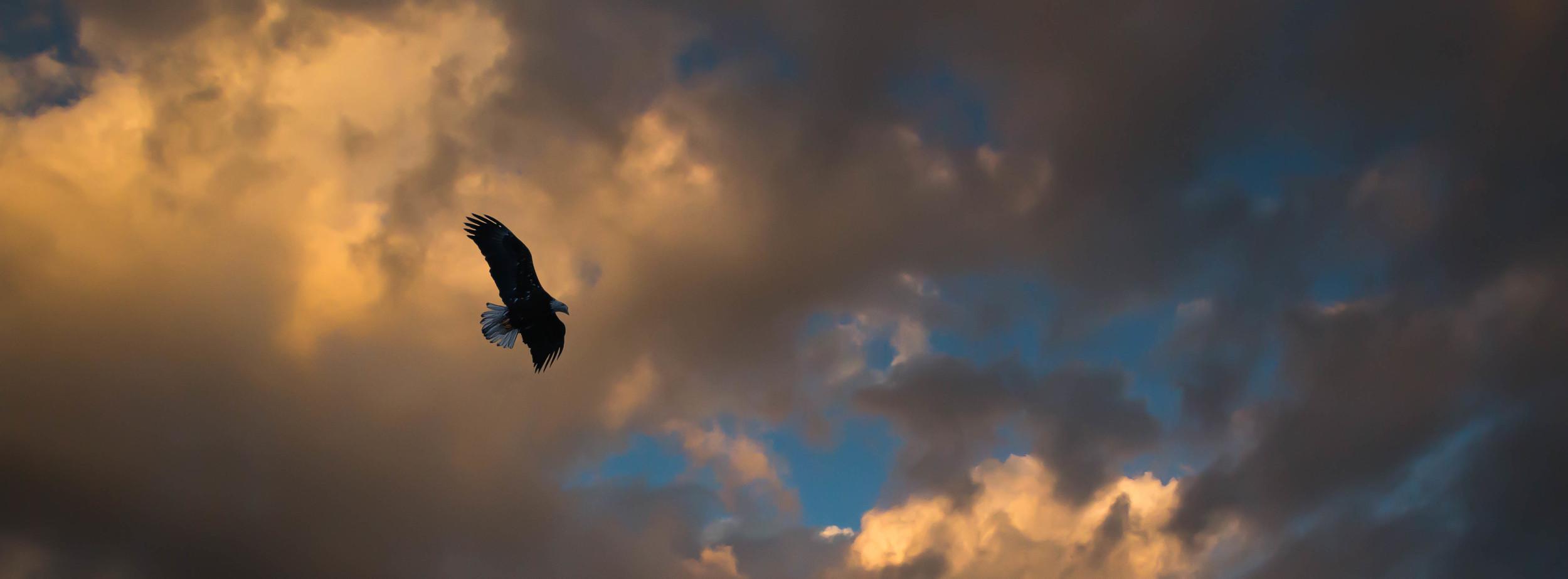Eagle Over the Fox River