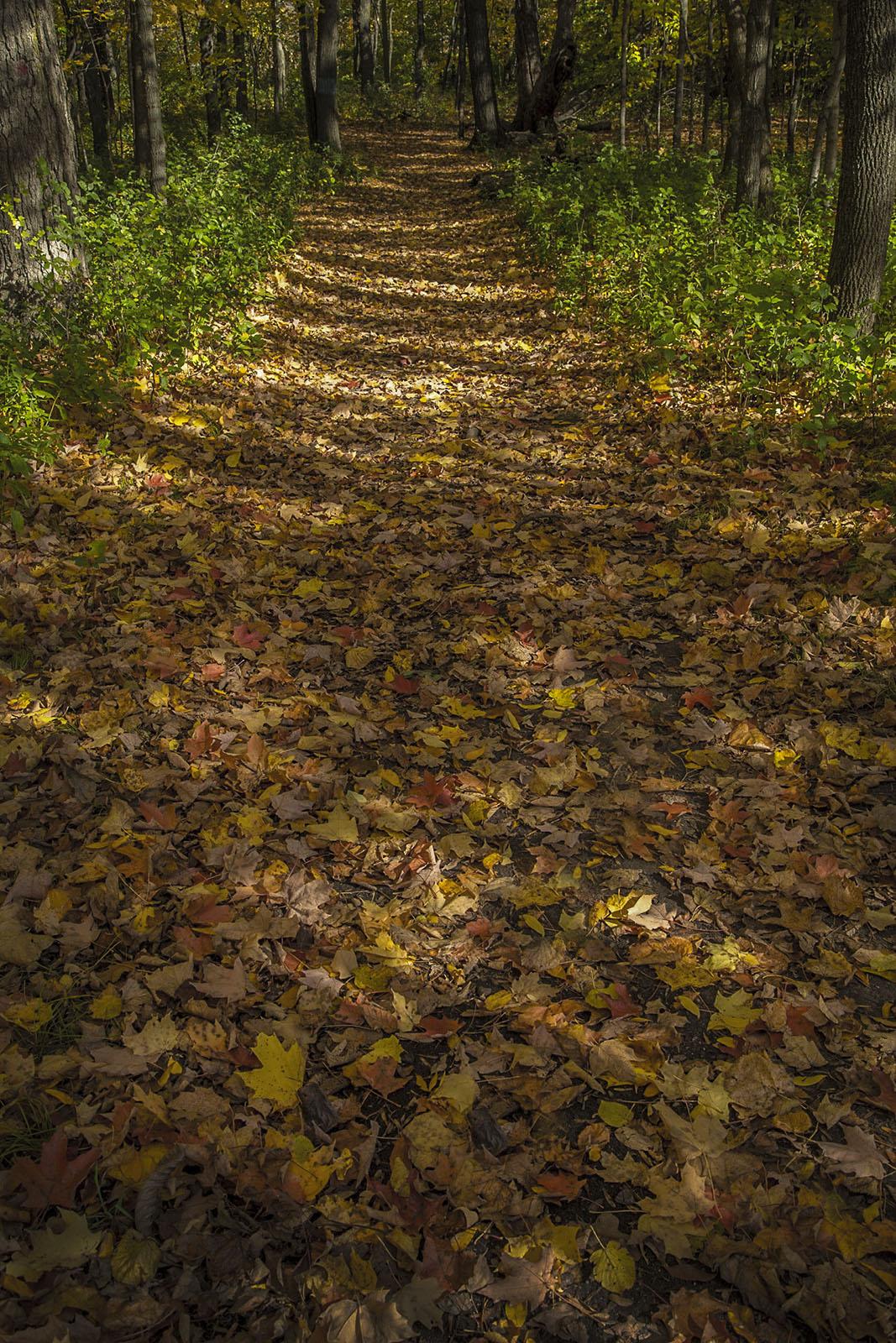 Trail of Fallen Leaves