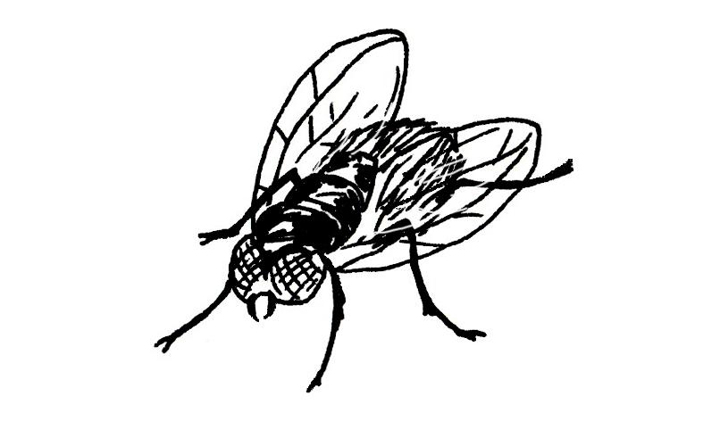 Ch 7 Bottlefly.jpg