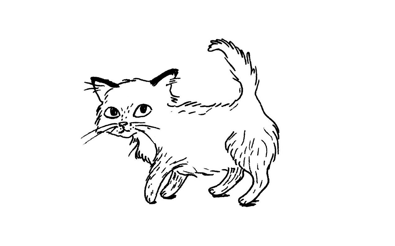 Ch 11 kitten.jpg
