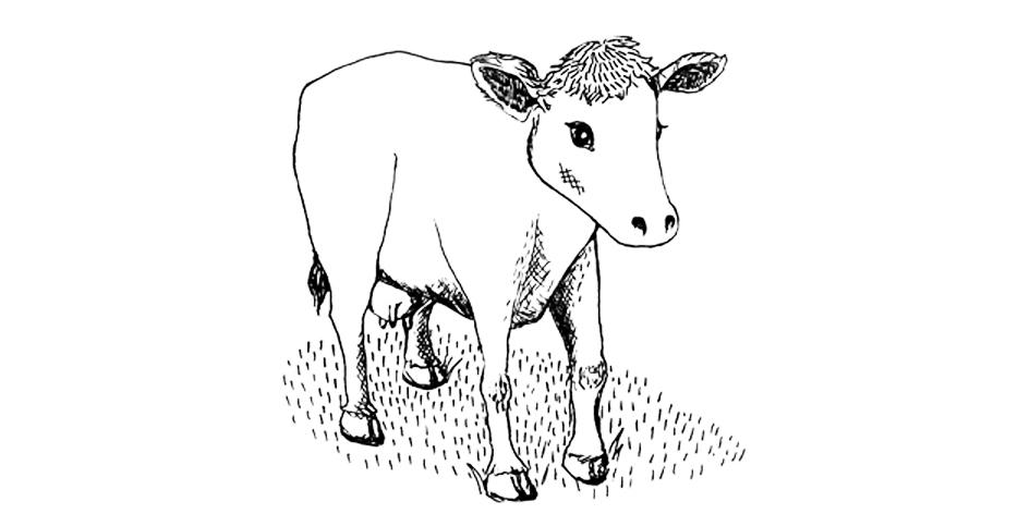 Jersey cow final.jpg