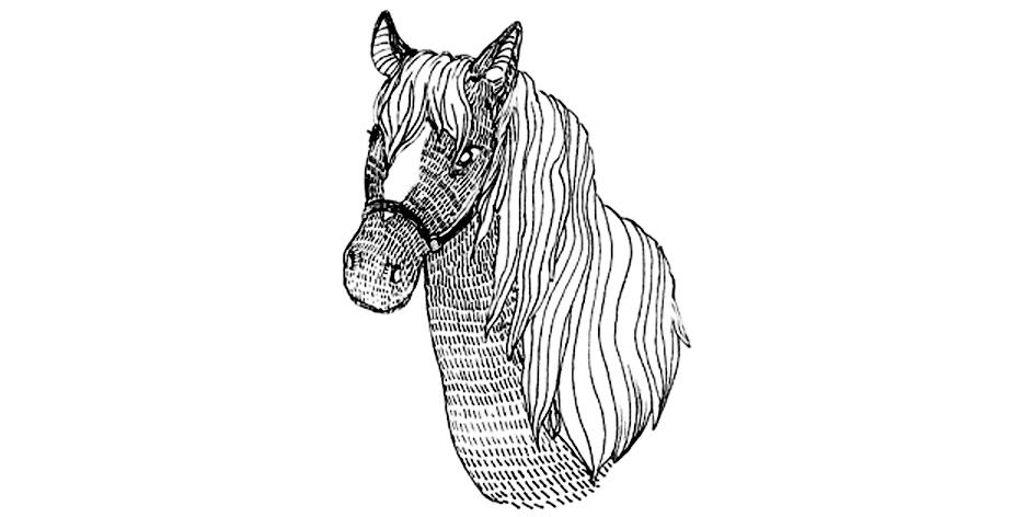 a horse final.jpg