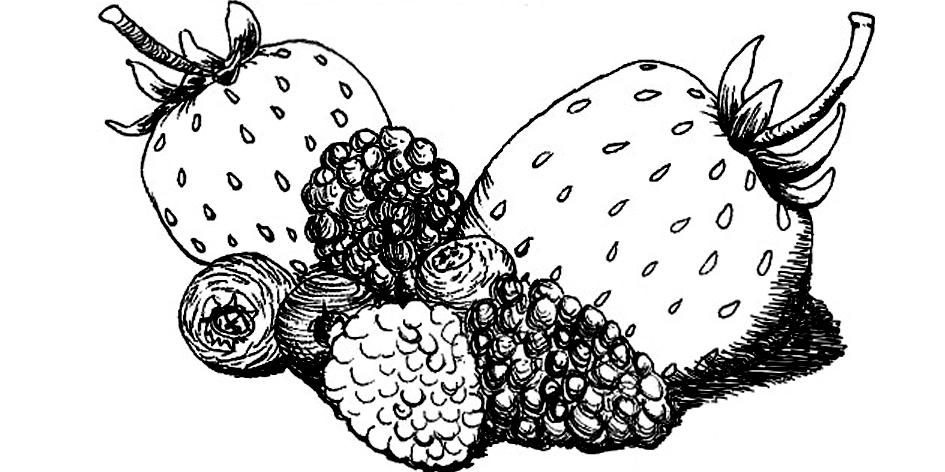 Berries final.jpg