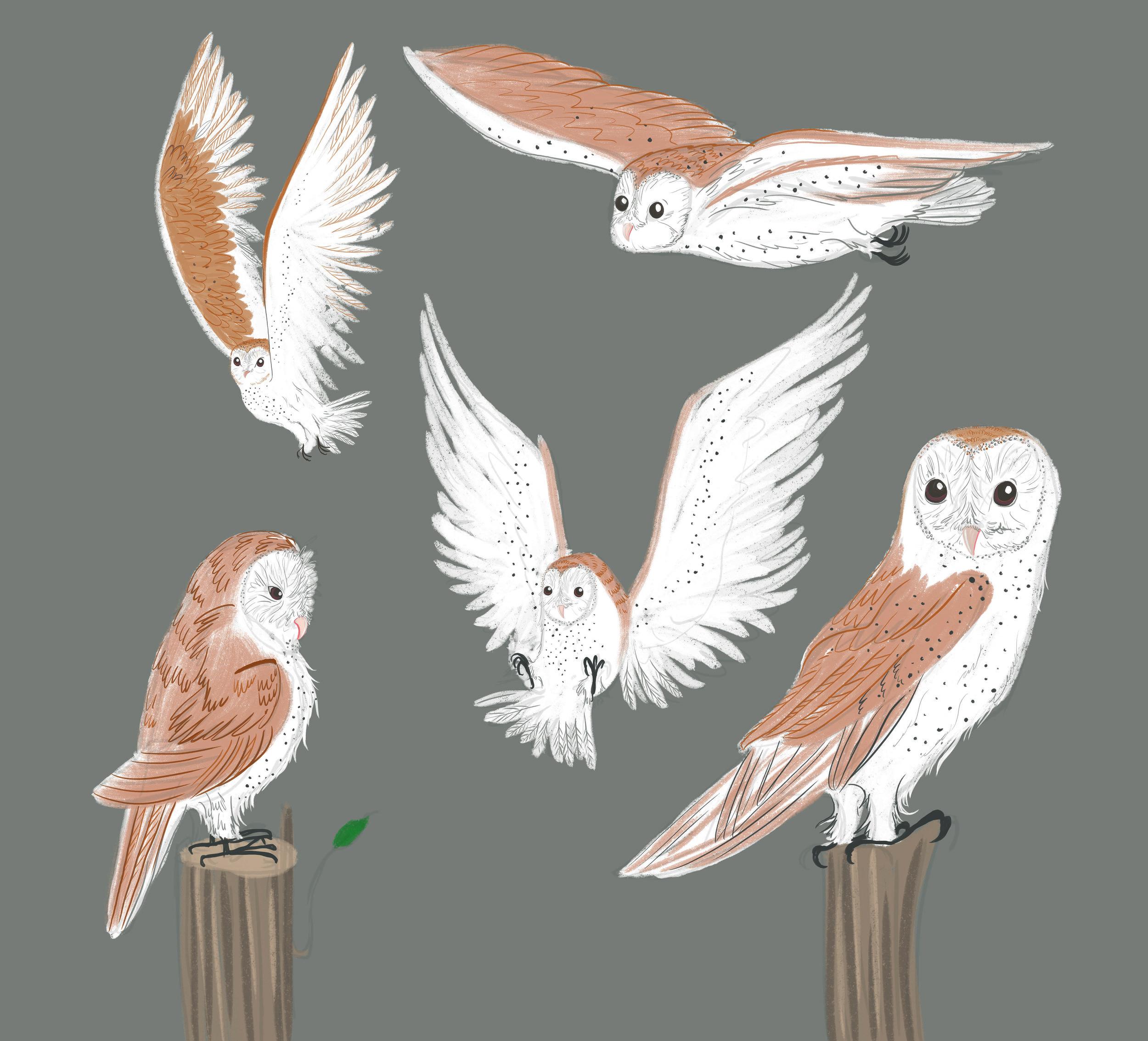 Owl character sheet.jpg
