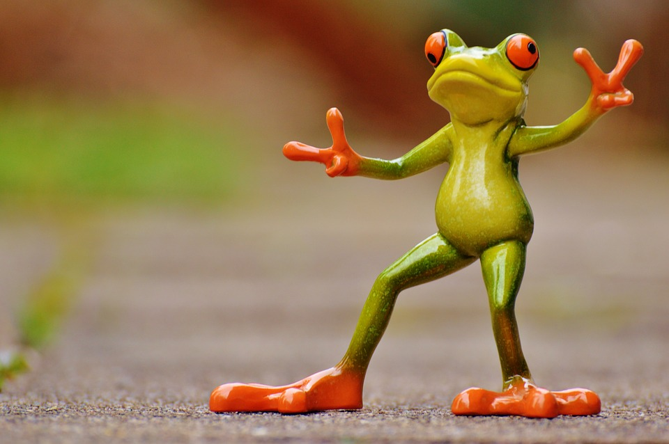 frog-1234514_960_720.jpg