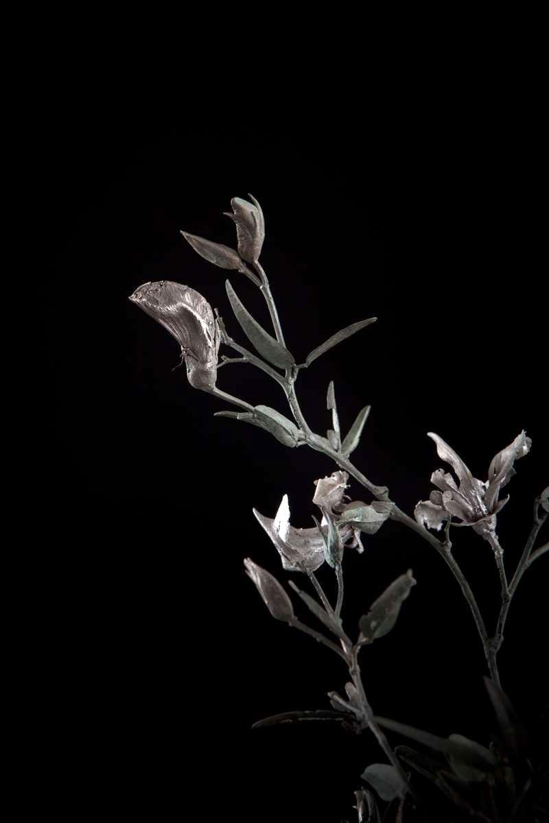 NicBladen_Botanicals_Beesboontjie-295.jpg
