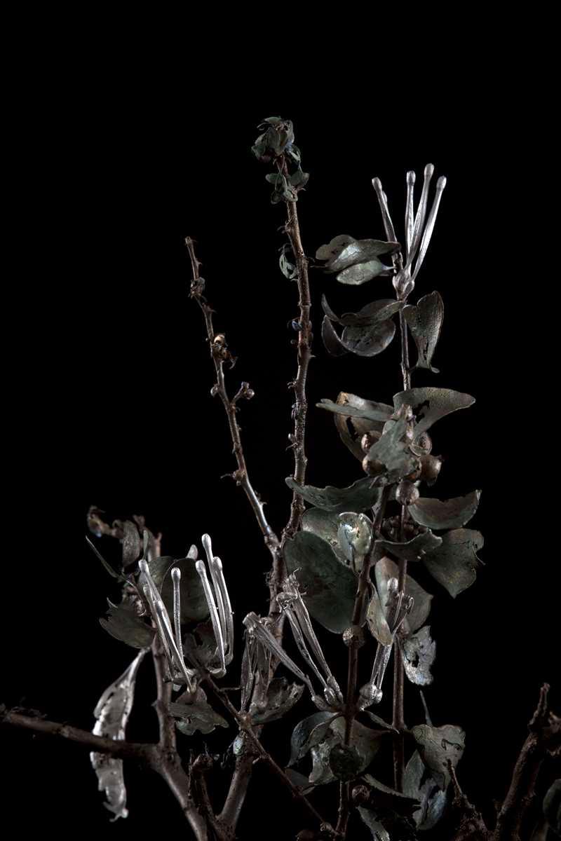 NicBladen_Botanicals_Black Thorn, Swarthaak, Mongana -007.jpg