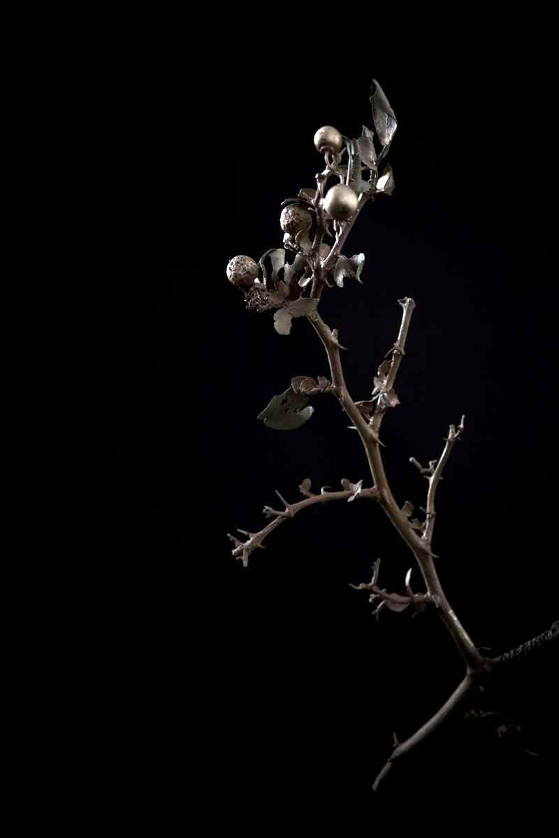 NicBladen_Botanicals_Buffalo Thorn, Blinkblaar-wag-'n-bietjie, Mokgalu -033.jpg