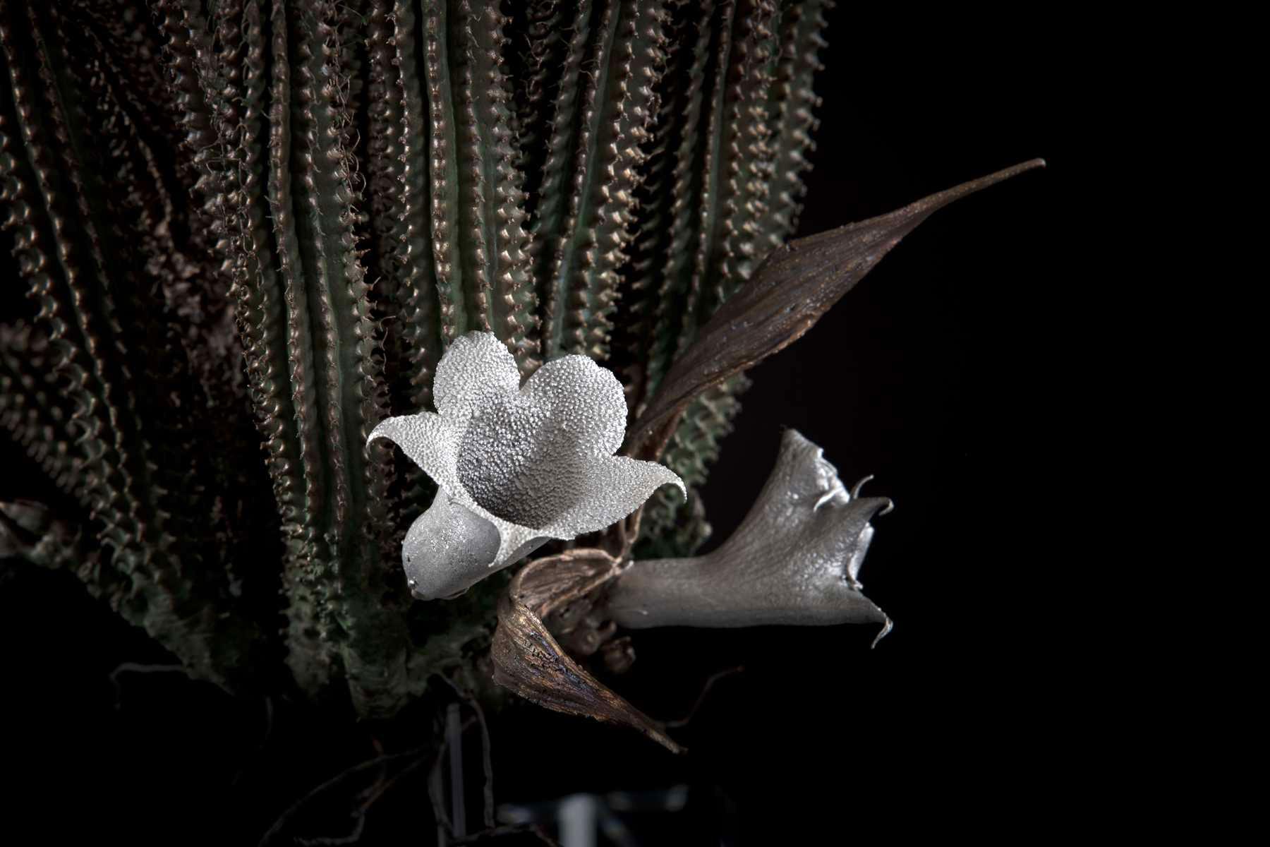 NicBladen_Botanicals_Devil's Trumpet, Bergghaap-146.jpg