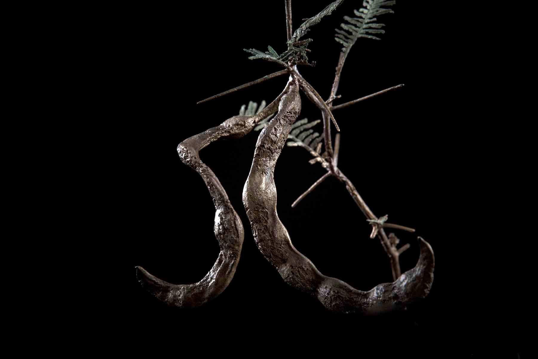NicBladen_Botanicals_Grey Camel Thorn, Vaalkameeldoring Mokholo-317.jpg