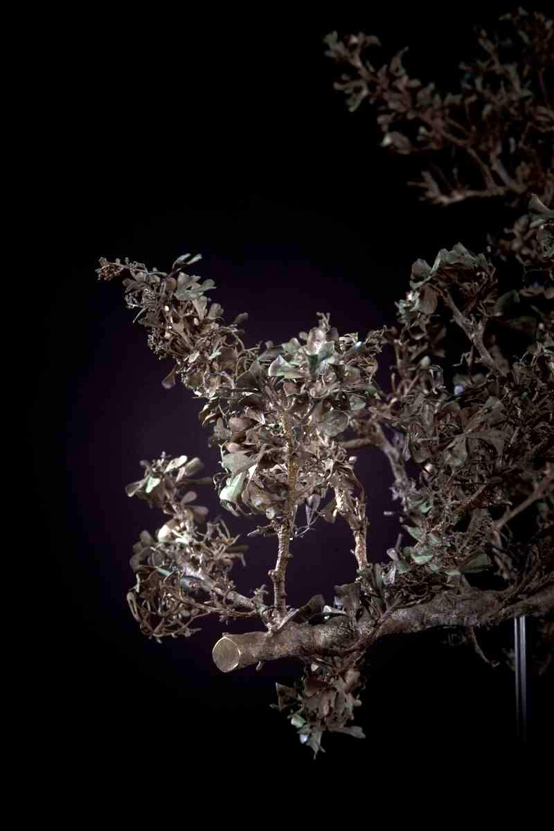 NicBladen_Botanicals_Karoo Kuni-bush, Kunibos, Mogodiri-122.jpg