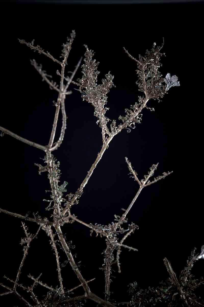 NicBladen_Botanicals_Three Thorn, Driedoring, Mokuburwane-084.jpg