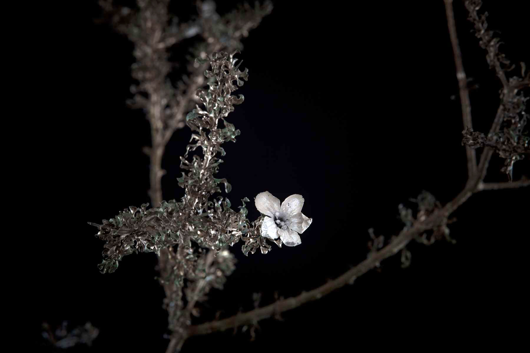 NicBladen_Botanicals_Three Thorn, Driedoring, Mokuburwane-092.jpg
