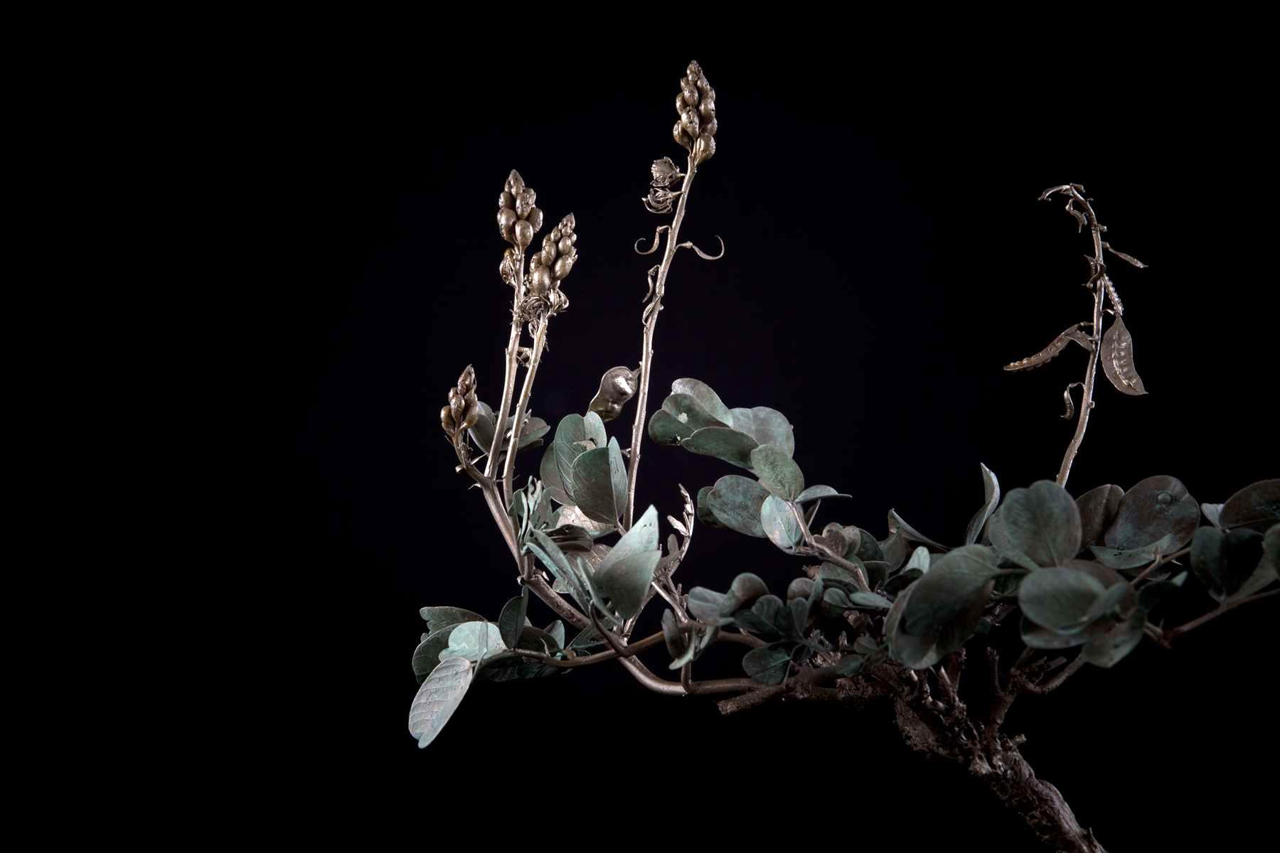 NicBladen_Botanicals_Wild Senna, Swartstorm, Sebete -243.jpg