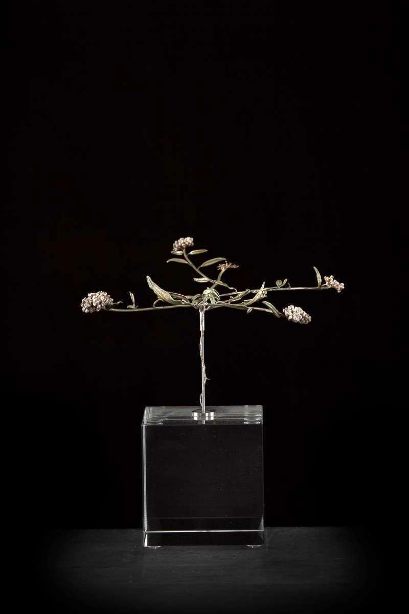 <i>Limeum argute-carinatum subsp. carinatum  </i>
